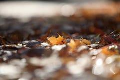De herfst doorbladert de weg Moskou van de stadsstraat stock afbeeldingen
