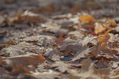 De herfst doorbladert de weg Moskou van de stadsstraat royalty-vrije stock afbeeldingen