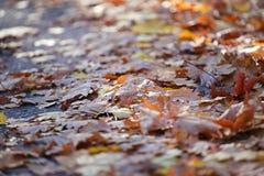 De herfst doorbladert de weg Moskou van de stadsstraat stock fotografie