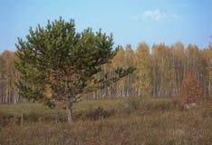 De herfst in dorp stock foto