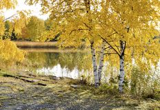 De herfst drie en overzees strand Royalty-vrije Stock Foto