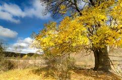 De herfst drie met zonstralen royalty-vrije stock foto