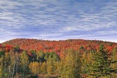 De herfst in Eastman. Stock Fotografie