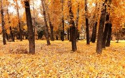De herfst in een bos Royalty-vrije Stock Afbeelding