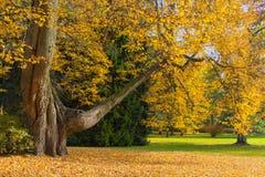 De herfst in een botanisch park Stock Fotografie
