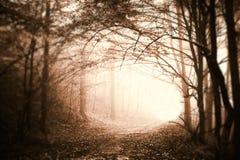 De herfst in een Forrest Royalty-vrije Stock Afbeeldingen