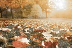 De herfst in een Forrest Royalty-vrije Stock Foto's