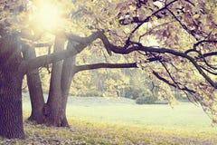 De herfst in een Forrest Stock Afbeelding