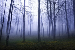 De herfst in een Forrest Royalty-vrije Stock Afbeelding