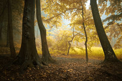 De herfst in een kleurrijk bos Stock Foto