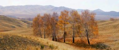 De herfst een landschap. Stock Foto