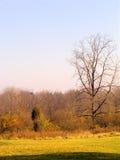 De herfst in een Nauwe vallei royalty-vrije stock afbeelding