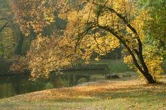 De herfst in een park Royalty-vrije Stock Foto's