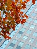 De herfst in een stad royalty-vrije stock afbeeldingen