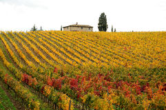 De herfst in een Wineyards in Toscanië, Chianti, Italië Stock Foto's