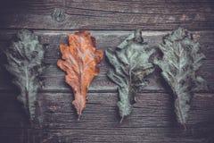 de herfst eiken bladeren op een rij, royalty-vrije stock afbeeldingen