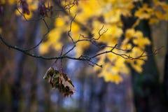 De herfst en bladeren Stock Afbeeldingen