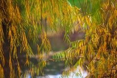 De herfst en bladeren Stock Foto