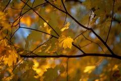 De herfst en bladeren Stock Afbeelding