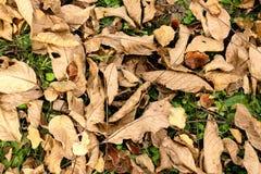 De herfst en de bladeren, de herfst voelen Stock Fotografie