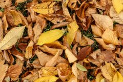 De herfst en de bladeren, de herfst voelen Stock Afbeelding
