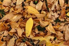 De herfst en de bladeren, de herfst voelen Royalty-vrije Stock Afbeeldingen