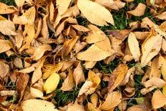 De herfst en de bladeren, de herfst voelen Royalty-vrije Stock Fotografie