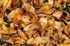 De herfst en de bladeren, de herfst voelen Royalty-vrije Stock Foto