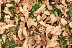 De herfst en de bladeren, de herfst voelen Stock Foto's