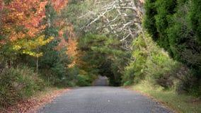 De herfst en daling onderaan een landweg royalty-vrije stock afbeelding