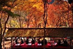 De herfst en esdoornbladeren Stock Foto's