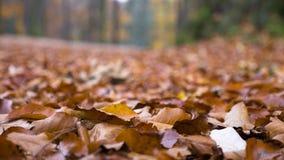 De herfst en gevallen bladeren Stock Fotografie