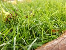 De herfst en gras Stock Foto's