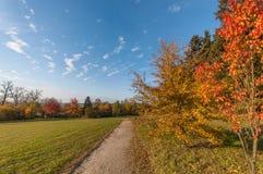 De herfst en heldere kleuren De bosboom van de herfst fairytale Royalty-vrije Stock Afbeeldingen