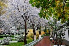 De herfst en sneeuw Royalty-vrije Stock Foto
