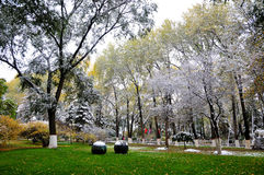 De herfst en sneeuw Royalty-vrije Stock Fotografie