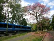 De herfst en de trein stock foto's