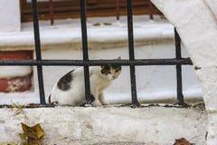 De herfst en verdwaalde kat royalty-vrije stock fotografie