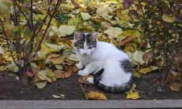 De herfst en verdwaalde kat stock afbeelding