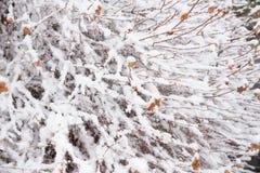De herfst en de winterachtergrond Stock Foto
