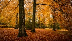 De herfst in Engels Park stock foto