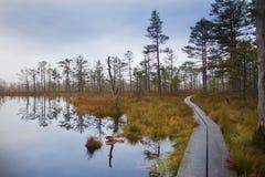 De herfst in Estlands moeras stock foto