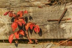 De herfst etude stock afbeelding