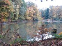 De herfst in Forest Surrounding een Meer met Eenden stock foto's