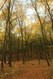 De herfst Forrest royalty-vrije stock afbeeldingen