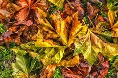 De herfst gaat backgrund weg Stock Foto