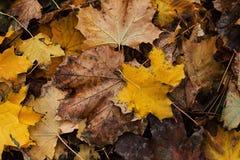 De herfst gaat ter plaatse weg Royalty-vrije Stock Foto's
