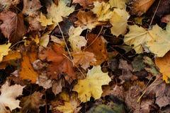 De herfst gaat ter plaatse weg Stock Foto
