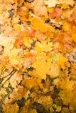 De herfst gaat ter plaatse weg Stock Afbeelding