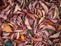De herfst gaat ter plaatse weg Stock Afbeeldingen